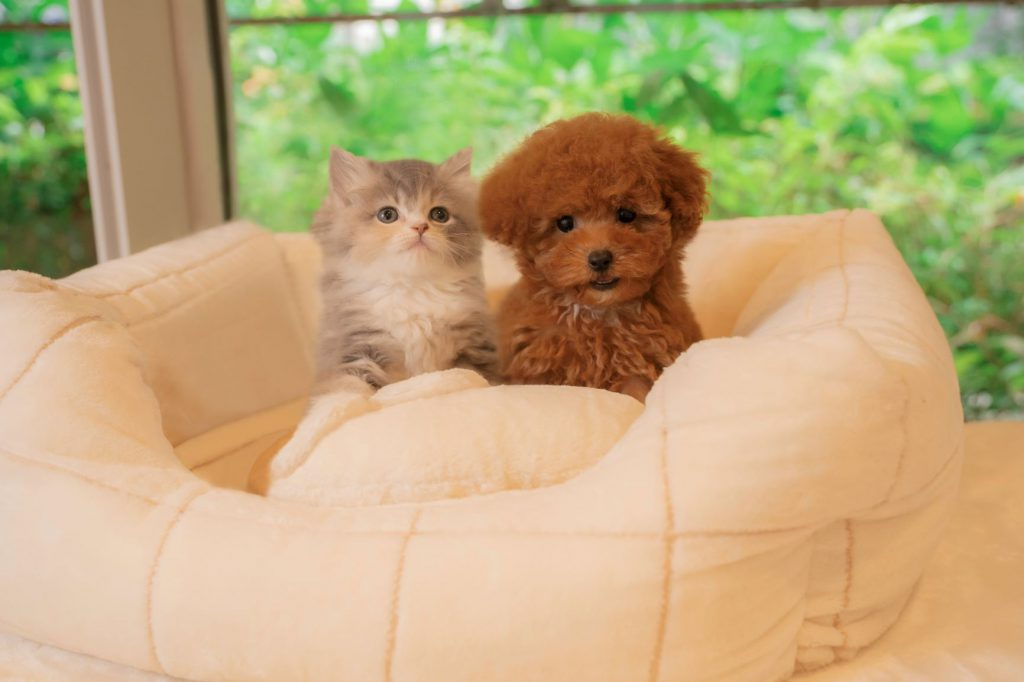 Pet Plus 武蔵小杉店の写真2