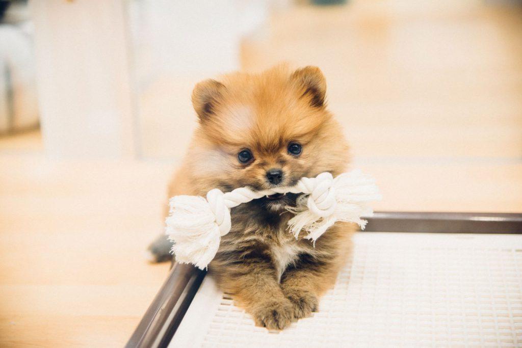 Pet Plus 武蔵小杉店の写真3